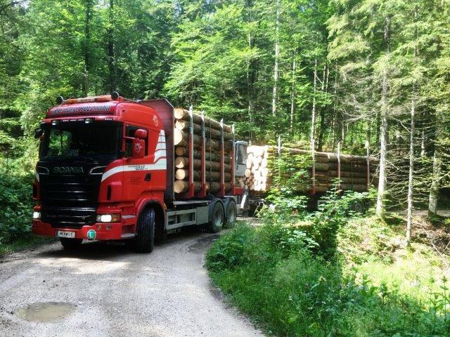 Transport von Rundholz